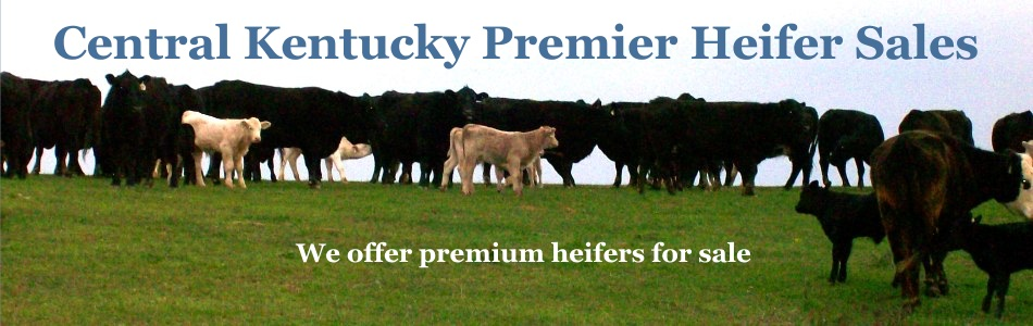 Central Kentucky Premier Heifer Sales Header